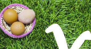 Пасхальные яйца в гнезде на траве с ушами зайчика стоковое фото rf