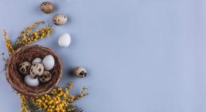 Пасхальные яйца в цветках гнезда и весны на предпосылке праздника Взгляд сверху с космосом экземпляра карточка пасха счастливая Стоковое Изображение RF
