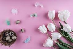 Пасхальные яйца в цветках гнезда и тюльпана на предпосылке весны Взгляд сверху с космосом экземпляра карточка пасха счастливая Стоковая Фотография