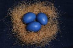 Пасхальные яйца 3 голубых яичка на гнезде для торжества пасхи Стоковые Изображения RF
