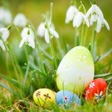 пасхальные яйца засевают snowdrops травой Стоковые Фотографии RF