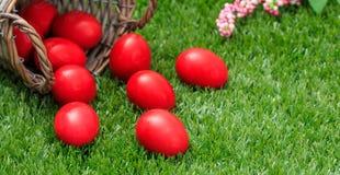 Пасхальные яйца из корзины на зеленой траве, конце вверх по взгляду, крупному плану Стоковые Изображения RF