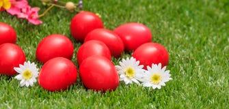 Пасхальные яйца и белые маргаритки на зеленой траве, конце вверх по взгляду Стоковое Фото