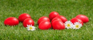 Пасхальные яйца и белые маргаритки на зеленой траве, конце вверх по взгляду Стоковые Изображения