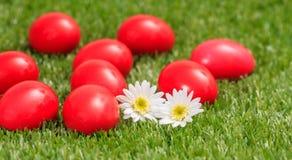 Пасхальные яйца и белые маргаритки на зеленой траве, конце вверх по взгляду Стоковые Фотографии RF
