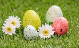 Пасхальные яйца и белые маргаритки на зеленой траве, конце вверх по взгляду Стоковая Фотография