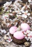 Пасхальные яйца и цветение Стоковая Фотография RF