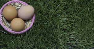 Пасхальные яйца кладут на гнездо на траве стоковое фото rf