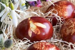 Пасхальные яйца покрашенные с корками лука, с картиной свежих трав Стоковое Изображение RF