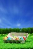 пасхальные яйца собрания стоковые фото