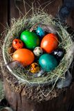 Пасхальные яйца Colourfull на старом деревянном пне Стоковые Фотографии RF