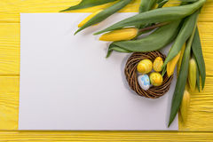 Пасха желтеет яичка в гнезде и тюльпаны на белой предпосылке Белая бумага, подготавливает для вашего текста Стоковая Фотография RF