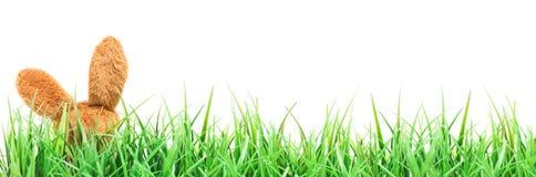 Пасха, зайчик пасхи в траве Стоковое фото RF