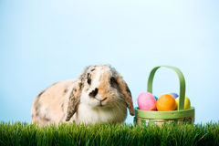 Пасха: Зайчик пасхи сидя в траве с корзиной яичек Стоковые Изображения RF