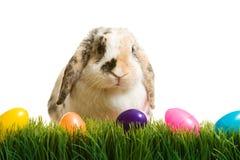 Пасха: Зайчик пасхи сидя в траве с пластичными пасхальными яйцами Стоковое Изображение RF