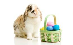 Пасха: Зайчик сидя с корзиной реальных пасхальных яя Стоковое фото RF
