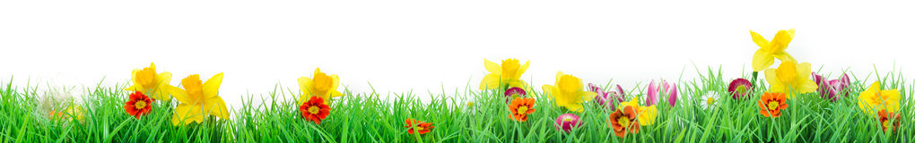 Пасха, изолированный луг цветка, знамя Стоковые Изображения RF