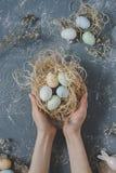 пасха счастливая Руки держа пасхальные яйца в гнезде с украшением пасхи, взгляд сверху Стоковые Изображения RF