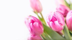 пасха счастливая Пестротканые тюльпаны весны и пасхальные яйца Украшения весны и пасхи Стоковая Фотография