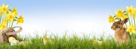 пасха счастливая Стоковое фото RF