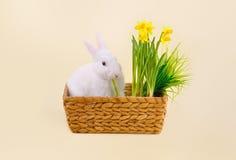 Белый зайчик есть в корзине с daffodils Стоковое фото RF