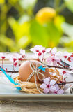 Пасха украсила яичко в плите Стоковые Фото