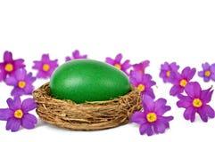 Пасхальное яйцо в цветках гнезда и весны изолированных на белизне Стоковые Изображения RF