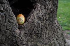 Пасхальное яйцо в hool дерева Стоковое Фото