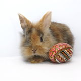 пасхальное яйцо зайчика покрасило Стоковое Изображение RF