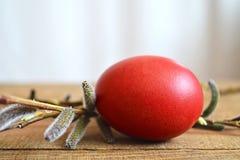 Пасхальное яйцо и вербы pussy Стоковое Изображение RF