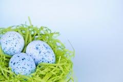 Пасхальные яйца в гнезде на голубой предпосылке Стоковое Изображение