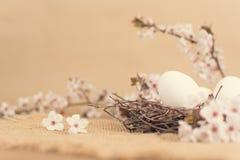 Пасхальные яйца в гнезде с цветками весны Стоковое Изображение RF