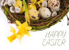 Пасхальные яйца в гнезде с narcissus Стоковые Фото