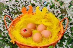 Пасхальные яйца в оранжевой корзине в цветках Стоковые Изображения RF