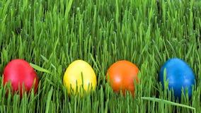 Пасхальные яйца в траве стоковые фотографии rf