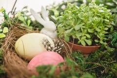 Пасхальные яйца завода и Стоковые Изображения