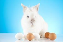 пасхальные яйца зайчика Стоковое фото RF
