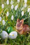 Пасхальные яйца, зайчик и snowdrops внешние Стоковые Фотографии RF