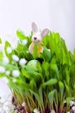 Пасхальные яйца и зайчик Стоковая Фотография