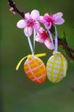Пасхальные яйца и розовые цветки Стоковое Изображение RF