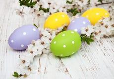 Пасхальные яйца и цветение вишен Стоковая Фотография