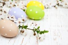 Пасхальные яйца и цветение вишен Стоковые Фотографии RF