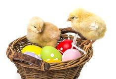 Пасхальные яйца и 2 newborn цыплят Стоковая Фотография