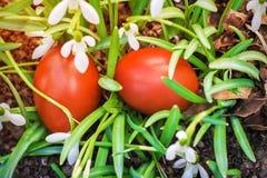 2 пасхальные яйца и snowdrops Стоковые Изображения RF