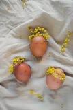 Пасхальные яйца как девушки в мимозе wreathes Стоковое фото RF