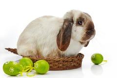 Пасхальные яйца кролика и Стоковые Изображения RF