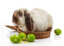 Пасхальные яйца кролика и Стоковое Изображение RF