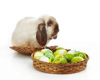 Пасхальные яйца кролика и Стоковое фото RF