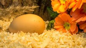 Пасхальные яйца на деревянных shavings с красным цветком Стоковые Изображения