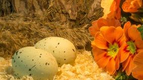 Пасхальные яйца на деревянных shavings с красным цветком Стоковые Фото